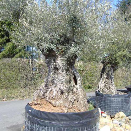 Plantation gazon, semis ou plaquage, plantations & arbres centenaires